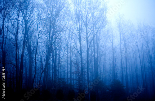 Wall Murals Forest Foggy Forest