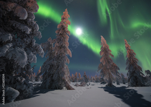 Foto auf Gartenposter Nordlicht Winter night landscape with forest and polar northern lights