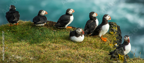 Fotografia Puffin, Heimaey coast, South Iceland