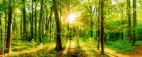 Fototapeten Wald Waldpanorama mit Sonnenstrahlen