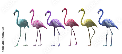 Photo Stands Flamingo Bird flamingo walking on a white background , flamingo isolated on white background ,Beautiful bird flamingo
