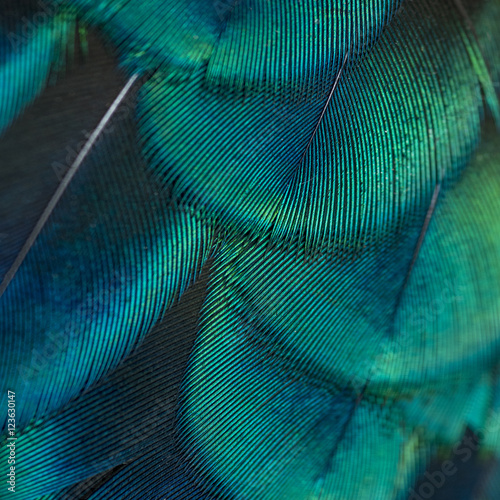 Canvastavla  close-up peacock feathers