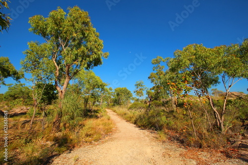 Obraz na plátně  Australian bush