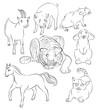 cat, goat rat, rabbit, tiger, horse and pig