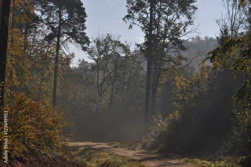 Papiers peints Foret brouillard Fog in the Frozen Forest