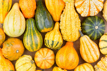 Background Of Colorful Ornamental Fall Gourds