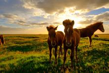 絶景 アイスランド 馬