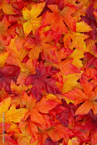 Autumn Leaves Background - 123665958