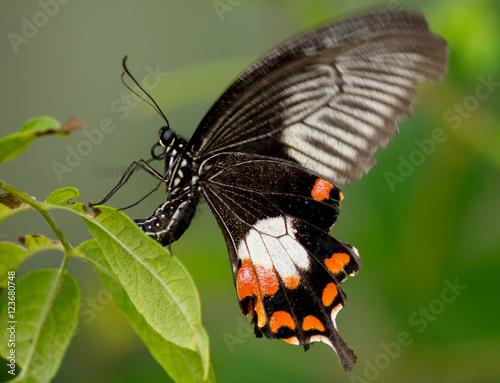 Foto auf Leinwand Schmetterling bewegende vlinder