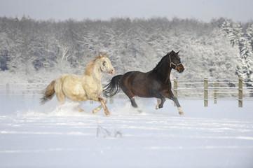 Fototapeta na wymiar Pferde im Schnee