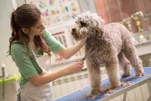 Fotografía  pet grooming with scissors