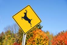 Deer Crossing Sign In Front Of...