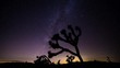 Joshua Trees and Milky Way Timelapse during Perseid Meteor Shower