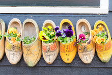 Traditional Dutch Shoes Clogs With Fresh Flowers Close Up