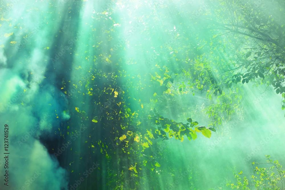 Fototapeta Promienie słoneczne padające na drzewa