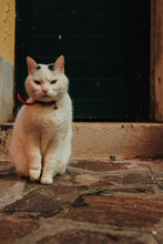 White Cat With Red Collar Sits On The Stone Path Behind A Door