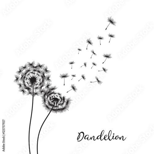 Fotografie, Obraz  Dandelion on the white background Vector Illustration