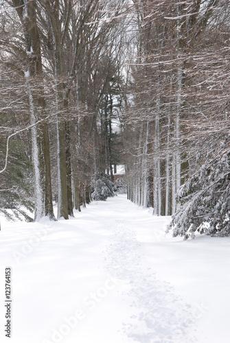 Fényképezés  Old Westbury Garden Snow