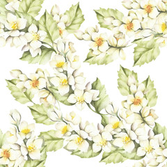 Panel SzklanySeamless pattern with Jasmine. Hand draw watercolor illustration