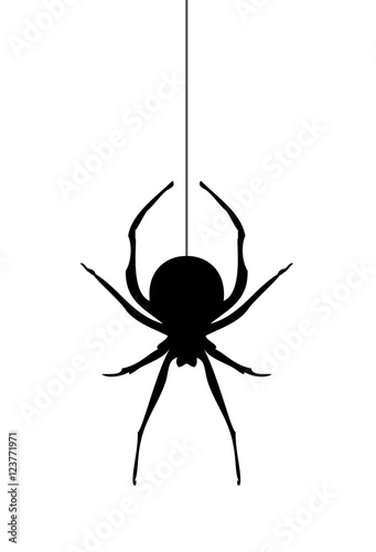 Photo  Vector Spider Silhouette