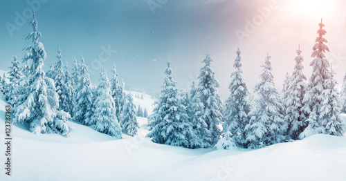 Poster Blanc beautiful wintry landscape