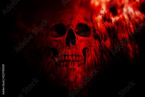 ludzka-czaszka-w-lesie-tlo-horror-na-halloween