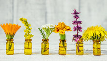 Drugs Herbs Extract In Small Bottles (calendula, Basil, Yarrow, Dandelion, Marigold, Goldenrod).