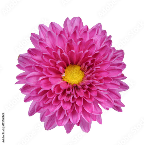 Tuinposter Gerbera Pink and Purple Flower Isolated on White