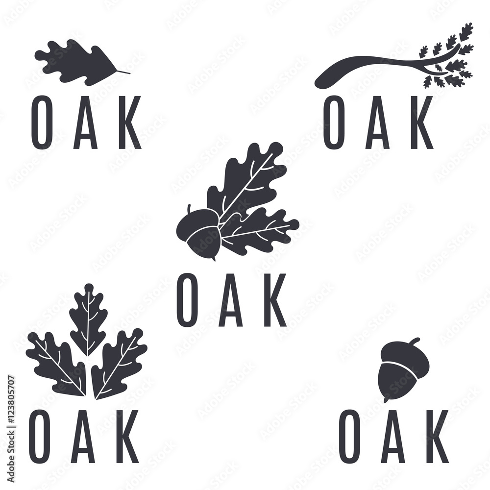 Fotografie, Obraz Set of logos on an oak tree with leaves and acorns.Vector illust