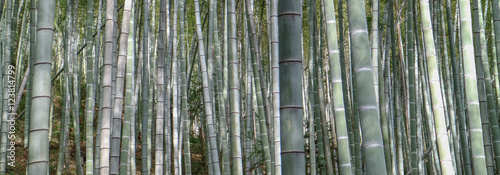 bamboo-in-the-chinese-forest