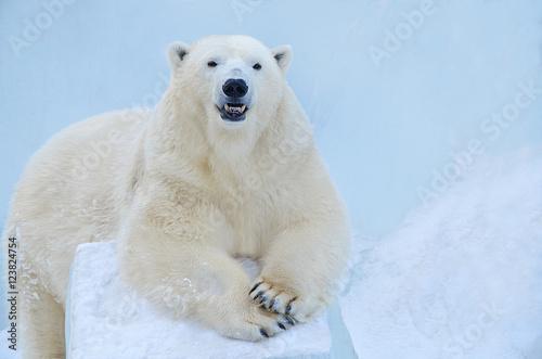 In de dag Ijsbeer Полярный медведь.