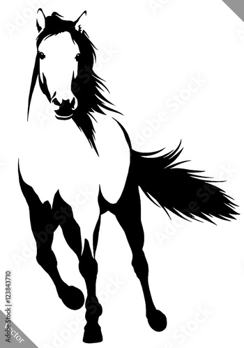Fototapety, obrazy: black and white linear paint draw horse vector illustration