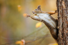 Squirrel Eagerly Reaching For What She Want Most