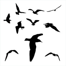 Vector Set - Seagull Silhouette On White Background Collection