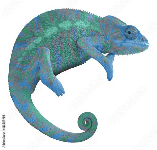 Deurstickers Kameleon Colorful Chameleon