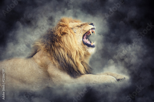 Lion in smoke on dark background