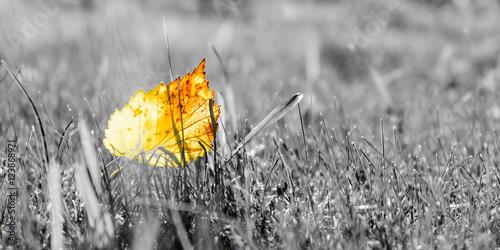 bliska-widok-pomaranczowych-lisci-jesienia-na