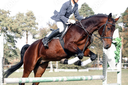 Poster Equitation Bay horse in jumping show against