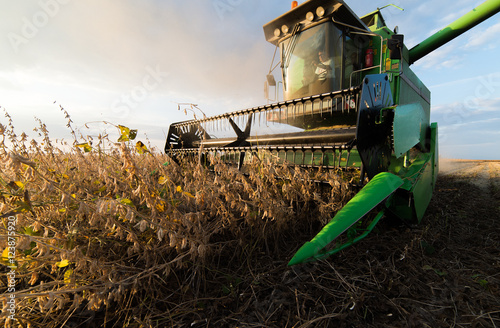 soybean harvest in autumn Fototapeta