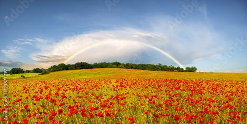 Plakat panorama makowej łąki,w tle tęcza