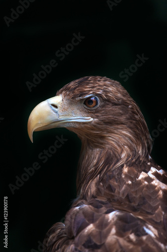 eagle-portrait-isolated-on-black