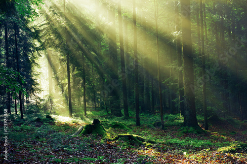 Fototapeta Magic Forest, National Park in Germany after the rain in the Morning Light