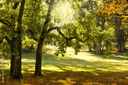 Kurpark mit herbstlicher Stimmung und Sonnenschein