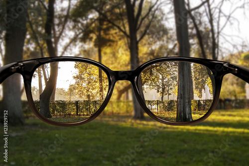 Fotografía  Clear vision forest