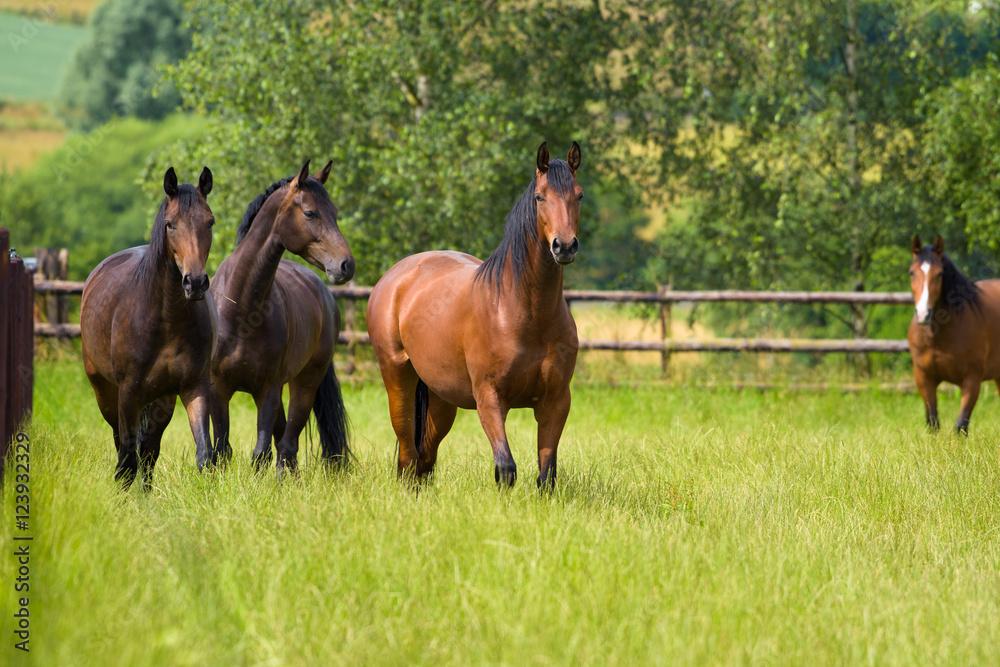 Vier Pferde auf einer eingezäunten Weide schauen den Betrachter an