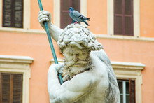 Pigeon On The Statue On Navona Square In Rome, Italy