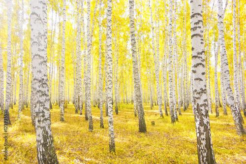 Poster Jaune autumn forest