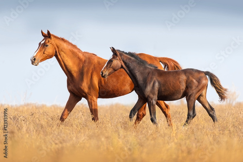 Photo  Mare and foal run on outomn pasture