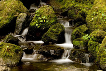 Rain Forest Waterfall 1