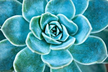 Succulent plant leaves.